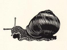 snail linocut illustration